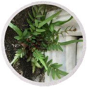 Round Beach Towel featuring the painting Fern by Kim Nelson