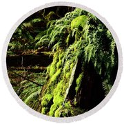 Round Beach Towel featuring the photograph Fern Stump by Jerry Sodorff