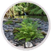Ferns Along Banks Of Eagle Creek Round Beach Towel