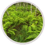 Ferns And Birch In Soft Light Round Beach Towel