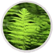 Ferns Stony Brook New York Round Beach Towel