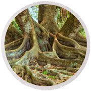 Ficus Roots Round Beach Towel