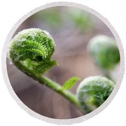 Fiddleheads Round Beach Towel