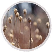 Field Of Dried Flowers In Earth Tones Round Beach Towel