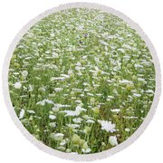 Field Of Queen Annes Lace Round Beach Towel
