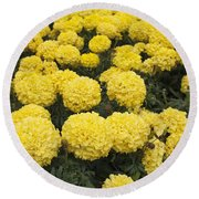 Field Of Yellow Marigolds Round Beach Towel
