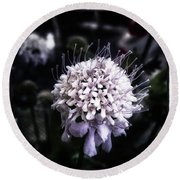 Round Beach Towel featuring the photograph Field Scabious. A Member Of The by Mr Photojimsf