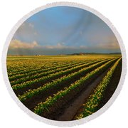 Round Beach Towel featuring the photograph Fields Of Yellow by Mike Dawson