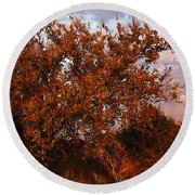 Fiery Elm Tree  Round Beach Towel