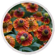Fiery Heleniums Round Beach Towel