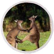 Fighting Kangaroos Round Beach Towel