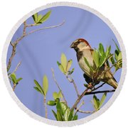 Finch Round Beach Towel