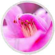 Fine Art- Pink Camellia Round Beach Towel