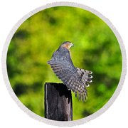Round Beach Towel featuring the photograph Fine Feathers by Al Powell Photography USA