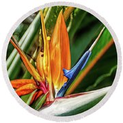 Round Beach Towel featuring the photograph Fine Wine Cafe Bird Of Paradise by Aimee L Maher Photography and Art Visit ALMGallerydotcom