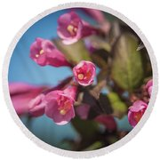 Round Beach Towel featuring the photograph Fine Wine Weigela by William Lee
