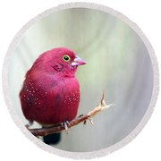 Fire Finch Round Beach Towel by Marion Cullen