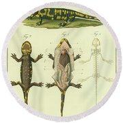 Fire Salamander Anatomy Round Beach Towel