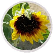 First Bloom Maturing  Round Beach Towel by Angela J Wright