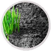 First Green Shoots Of Spring And Dirt Round Beach Towel