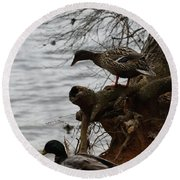 Round Beach Towel featuring the photograph First One In by Kim Henderson