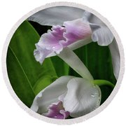 First Orchid At The Conservatory Of Flowers Round Beach Towel