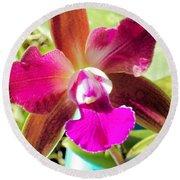 Beautiful Lavendar Orchid Round Beach Towel by Belinda Lee