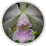 First Orchid Straight On Round Beach Towel