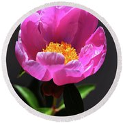 First Peony Round Beach Towel by Skip Willits