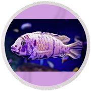Round Beach Towel featuring the photograph Calico Goldfish by Joan Reese