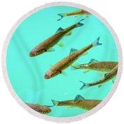 Fish School In Turquoise Lake - Plitvice Lakes National Park, Croatia Round Beach Towel
