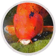 Round Beach Towel featuring the photograph Fish Surprise by Raphael Lopez