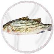 Fish Round Beach Towel