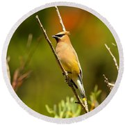 Fishercap Cedar Waxwing Round Beach Towel by Adam Jewell