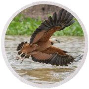 Fishing Hawk Round Beach Towel by Wade Aiken