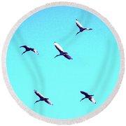 Five Ibis In Flight Round Beach Towel