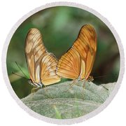 Round Beach Towel featuring the photograph Flambeau Butterfly - 2 by Paul Gulliver