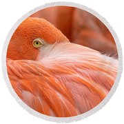 Flamboyant Flamingo Round Beach Towel
