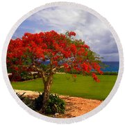 Flamboyant Tree In Grand Cayman Round Beach Towel