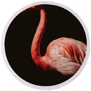 Round Beach Towel featuring the photograph Flamingo 7 by Andrea Anderegg