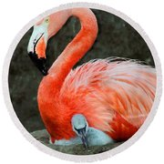 Flamingo And Baby Round Beach Towel