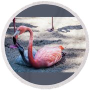 Flamingo Feeding Chick Round Beach Towel by Daniel Hebard