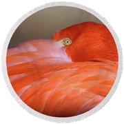 Flamingo Round Beach Towel by Michael Hubley