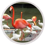 Flamingo Party Round Beach Towel by Beth Saffer