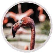 Flamingo Portrait Round Beach Towel