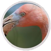 Flamingo Protrait Round Beach Towel