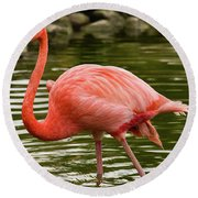 Round Beach Towel featuring the photograph Flamingo Wades by Nicole Lloyd