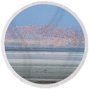 Flamingos And Golden Jackal In Tanzania Round Beach Towel