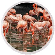 Flamingo Looking For Food Round Beach Towel