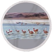 Flamingos Round Beach Towel by Sandy Taylor